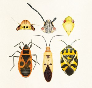 pl_arts_bugs_collage